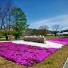 軽井沢で芝桜